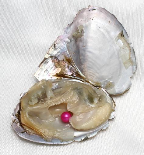DIY Coloured Pearl Oyster