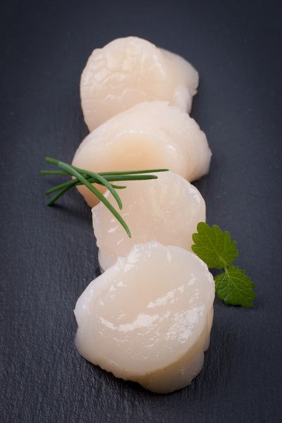Farmed Bay Scallops
