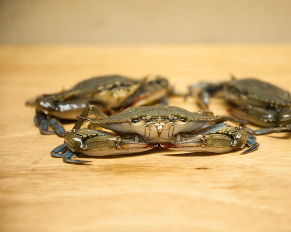 Soft Shell Crabs Live