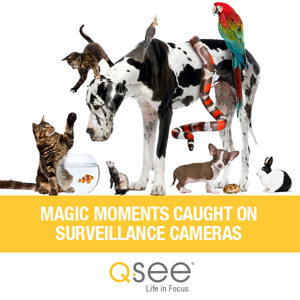 Magic Moments of Dogs and Cats  Caught on Surveillance Cameras
