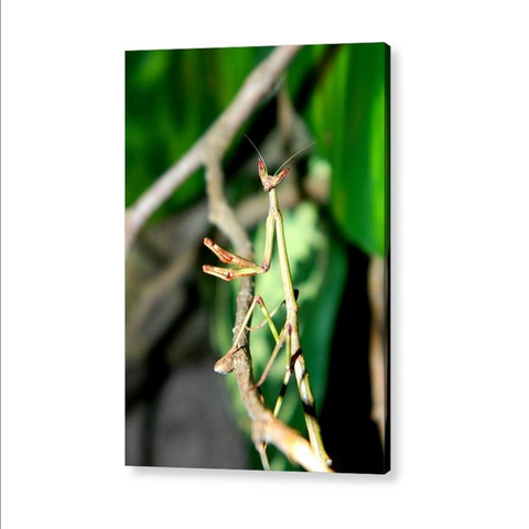 Hanging Out In The Trees - Acrylic Print *