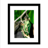 Hanging Out In The Trees - Framed Print *