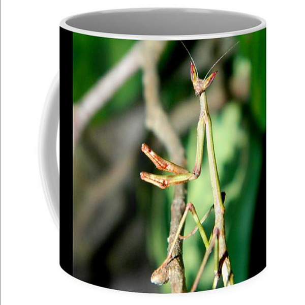 Buy Giant African Stick Mantis Mug For Sale | PanTerra Pets