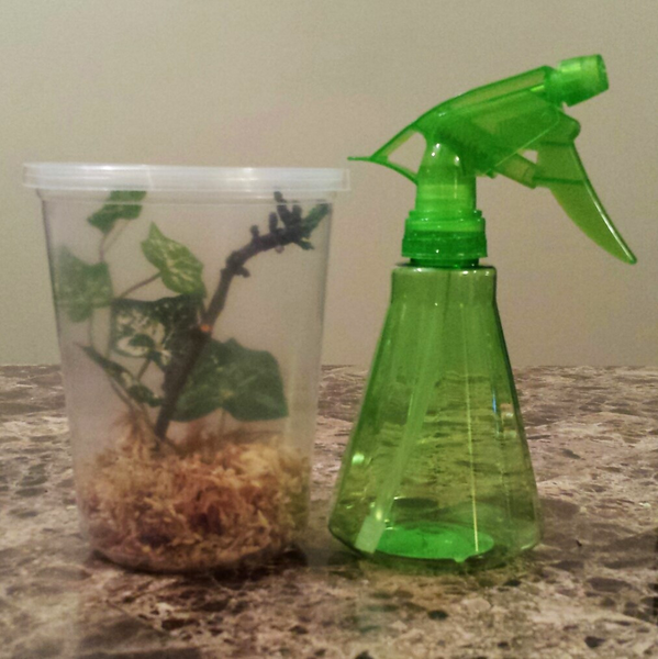 Praying Mantis Habitat Starter Kit