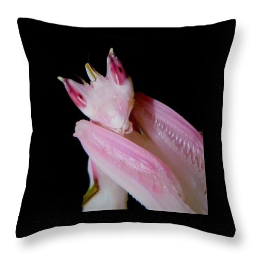 Buy Orchid Praying Mantis Throw Pillow For Sale | PanTerra Pets