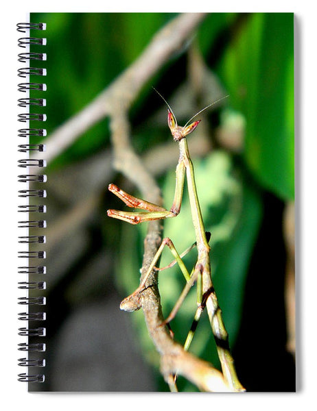 Hanging Out In The Trees - Spiral Notebook *
