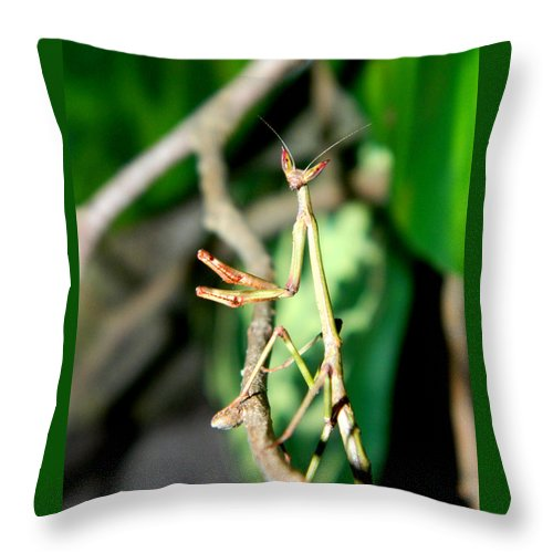 Buy Giant African Stick Mantis throw pillow For Sale | PanTerra Pets