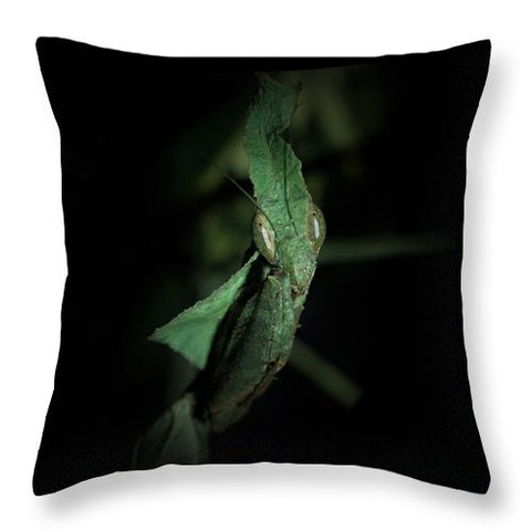 Buy Ghost Mantis throw pillow For Sale | PanTerra Pets