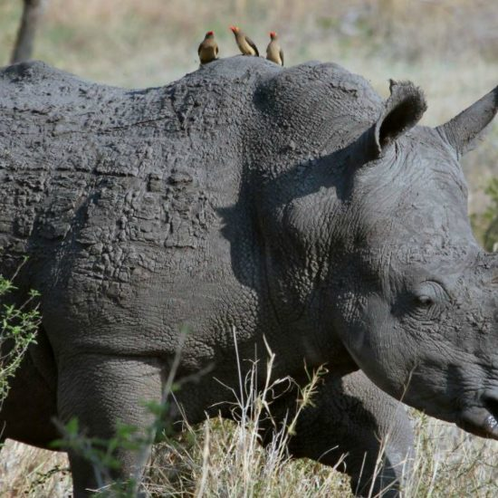 What Do Rhinos and Perfectionism Have to Do with Being a Woman?