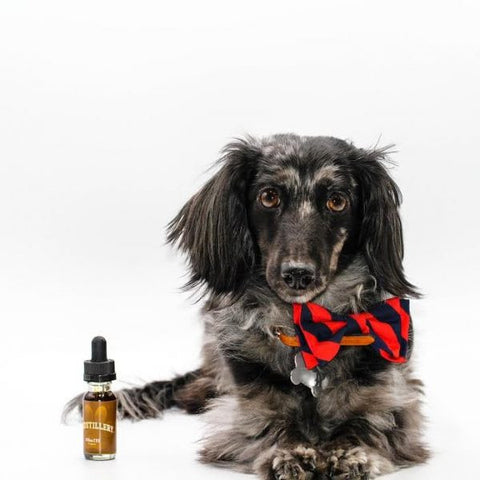 CBDistillery 150mg 15ml CBD Pet Tincture