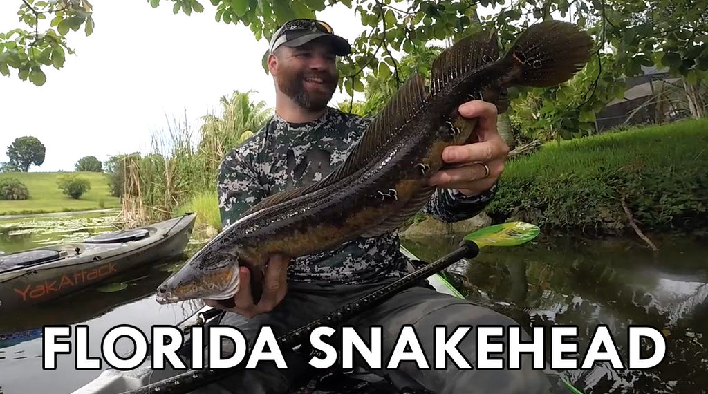 ActionHat Presents: Florida Snakehead Fishing