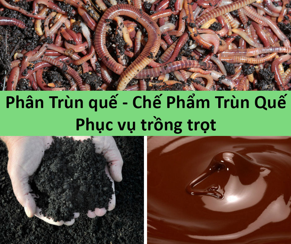 dich-trun-que-phan-trun-que-chat-luong-re