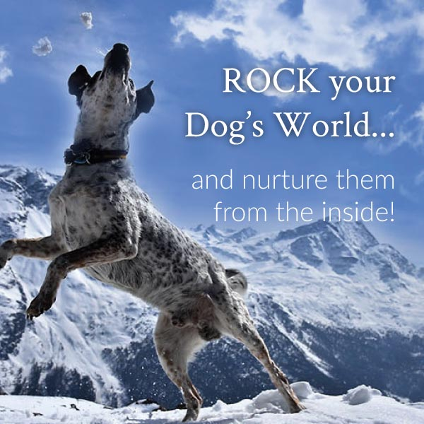 Rock your Dog's world