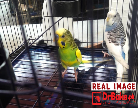 2 Pc Australian Parrot With Cage - Limited cities