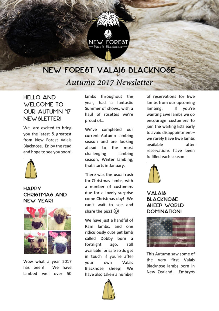 Autumn New Forest Valais Blacknose Newsletter is here!