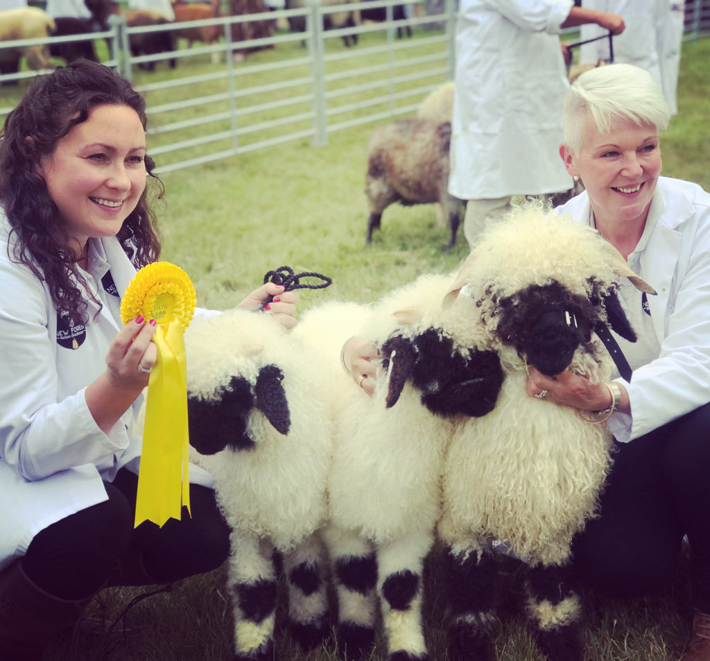 Success at the New Forest Show 2019!