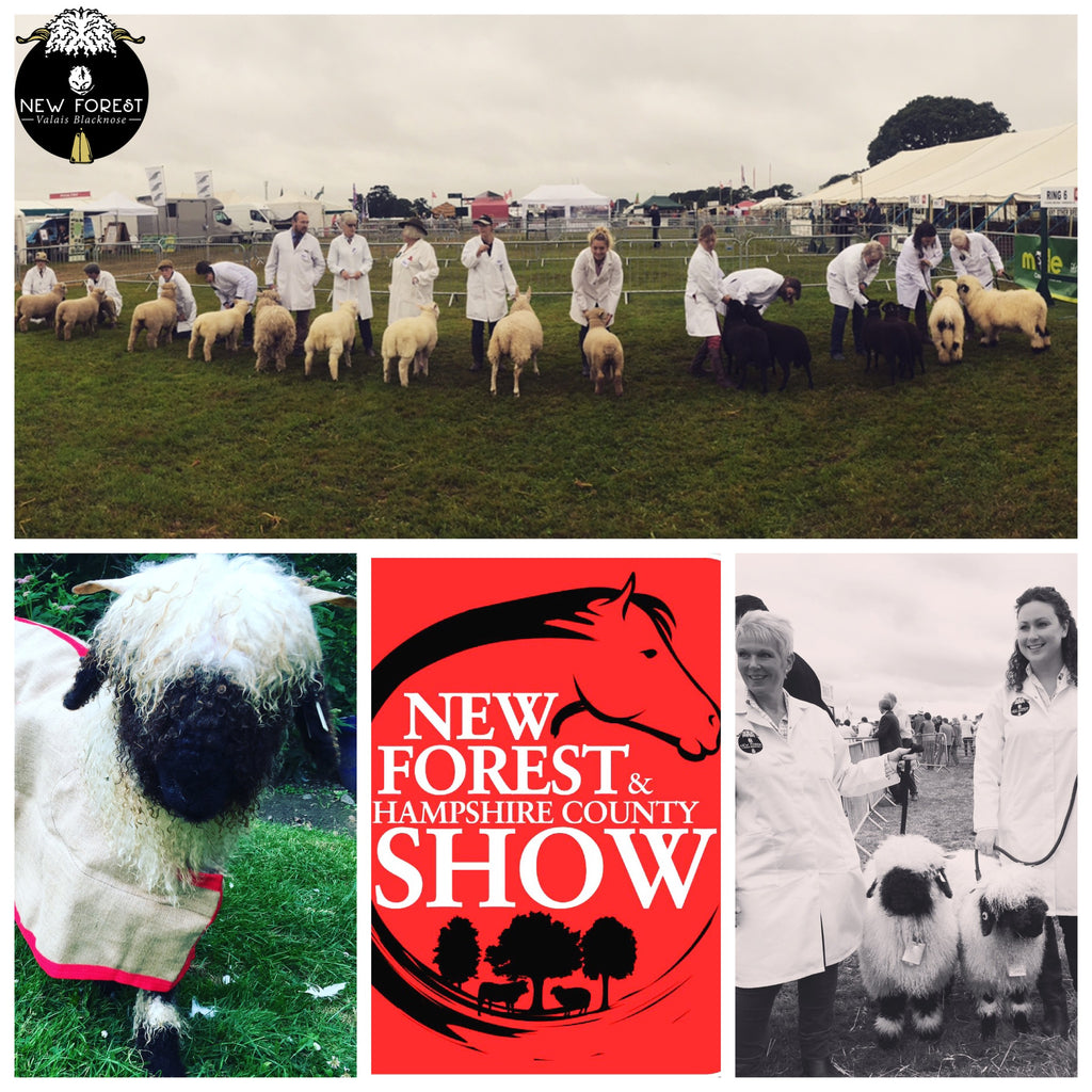 New Forest Valais Blacknose at the New Forest Show!