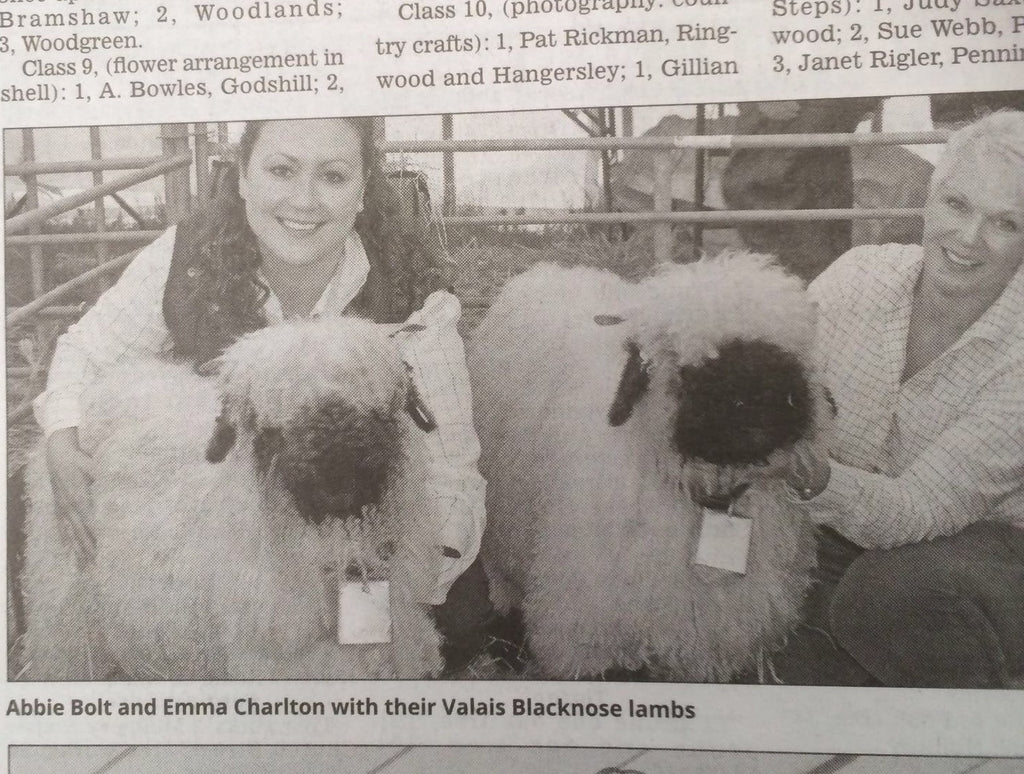 Our Valais Blacknose Lambs make it into the Press!
