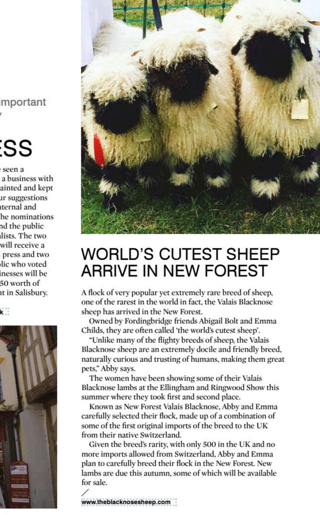 New Forest Valais Blacknose Featured in September's Salisbury Life Magazine