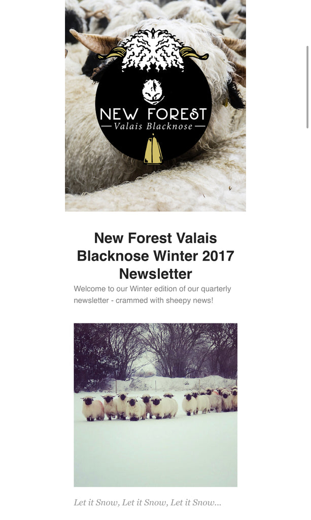 Winter New Forest Valais Blacknose Newsletter Is Here!
