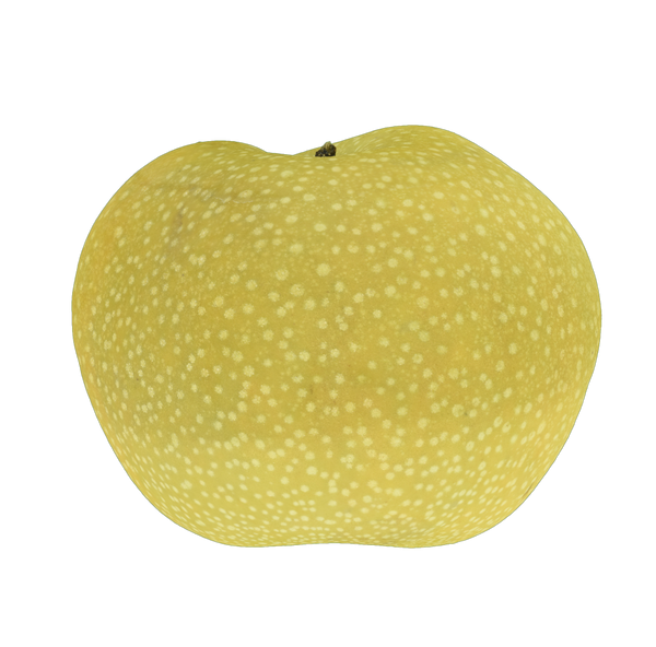 Asian Pear #1 - _blankRepository