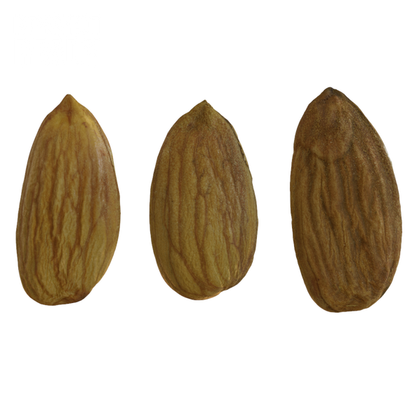 Almonds #1 KeyShot Ready