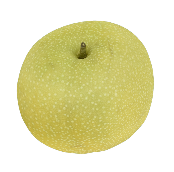 Asian Pear #2 - _blankRepository