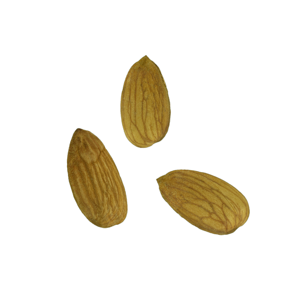 Almonds (Three different ones) #1 - _blankRepository