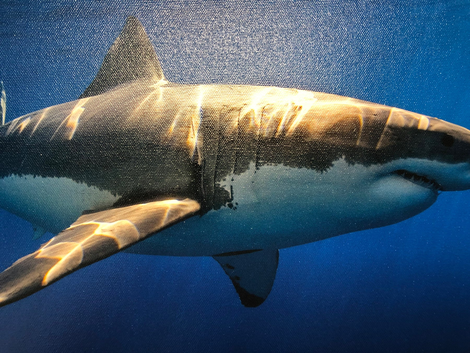 Deano Cook Great White Shark - 2:3 / 54''W x 36''H