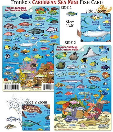 Franko Maps Caribbean Sea Mini Fish Card Accessory / 4'' x 6''
