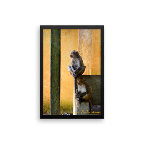 Popa Primates, Framed Art, - Explore Dream Discover