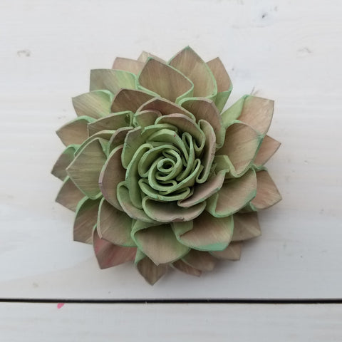 sola flower as a succulent