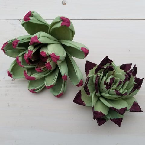 wood succulents