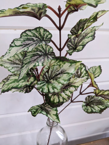 Variegated Begonia Leaves Greenery - faux _sola_wood_flowers