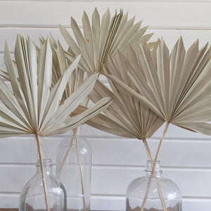 Palms -Dried _sola_wood_flowers