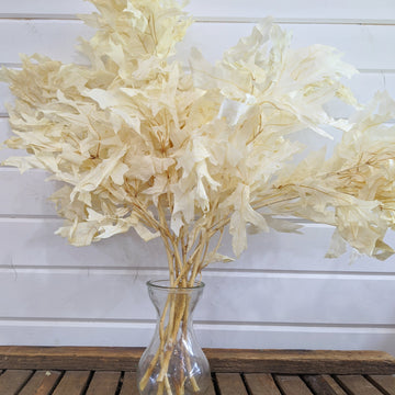 Oak Leaves -Preserved Bleached- Perfectly Imperfect _sola_wood_flowers