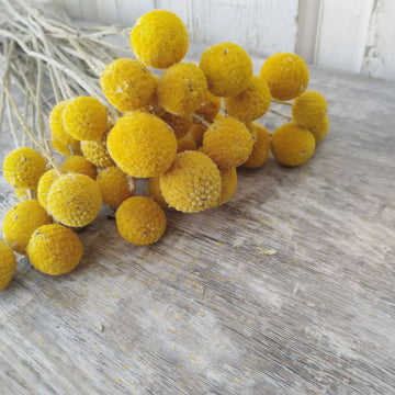 Billy Balls - Natural Gold -Dried - 3 oz _sola_wood_flowers
