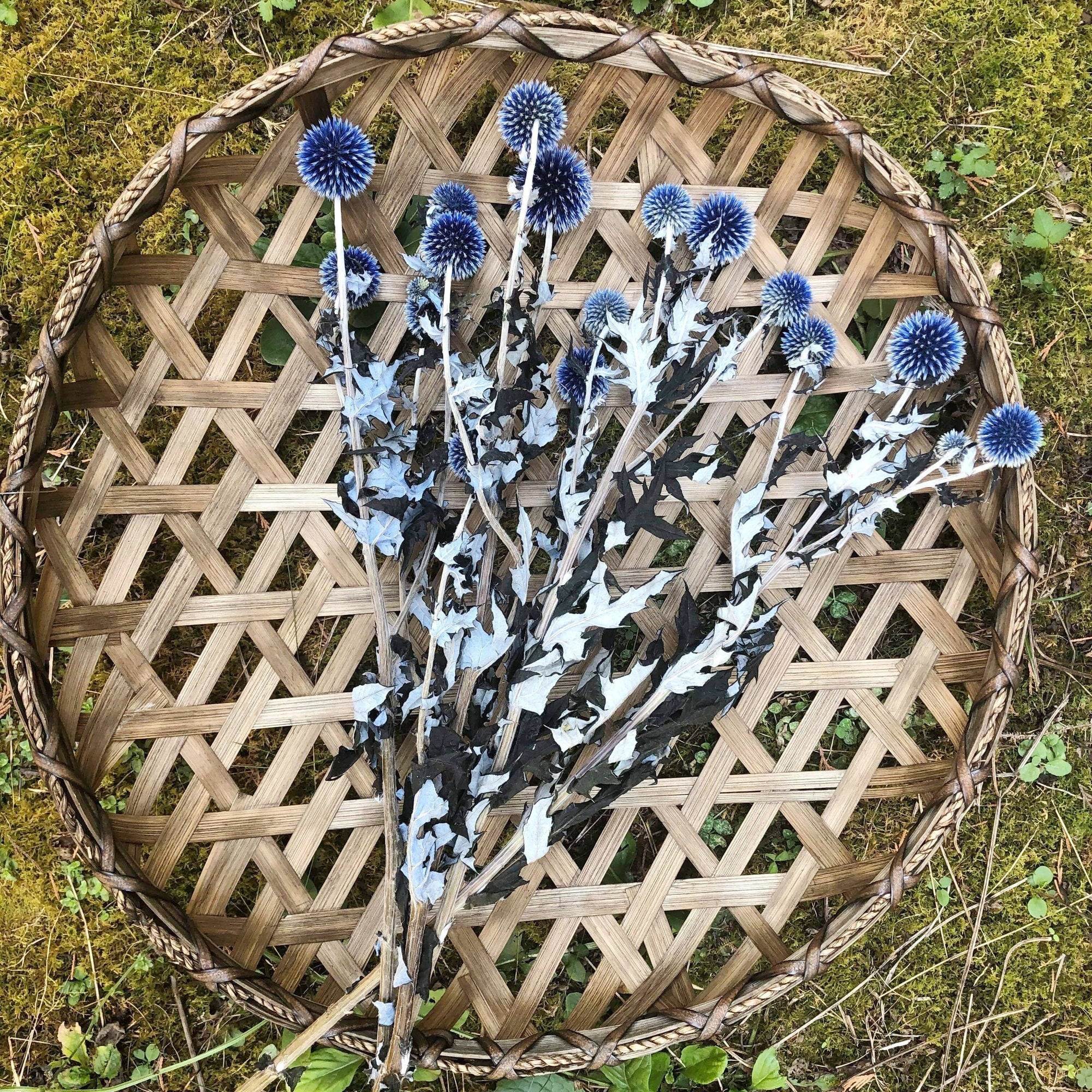 Blue Echinops - Dried -4oz _sola_wood_flowers