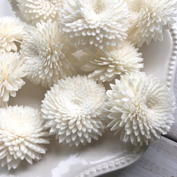 Chrysanthemums (mums) - Set of 12 _sola_wood_flowers