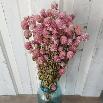 Globe Amaranth - Light Pink - Dried -4oz _sola_wood_flowers
