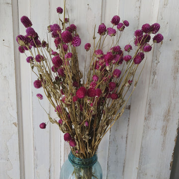 Globe Amaranth - Purple - Dried- 4oz _sola_wood_flowers