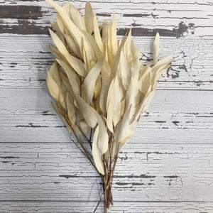Willow Eucalyptus -Preserved Bleached