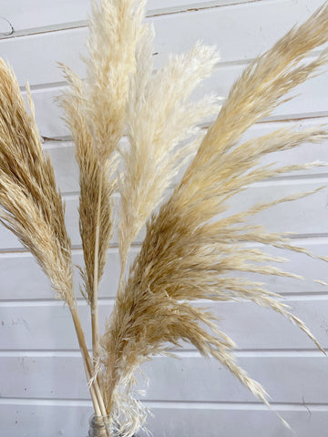 Pampas Grass- Dried/Natural _sola_wood_flowers