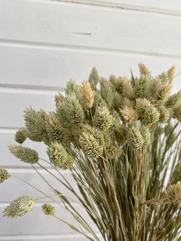 Phalaris- Dried/Natural - 4 oz _sola_wood_flowers