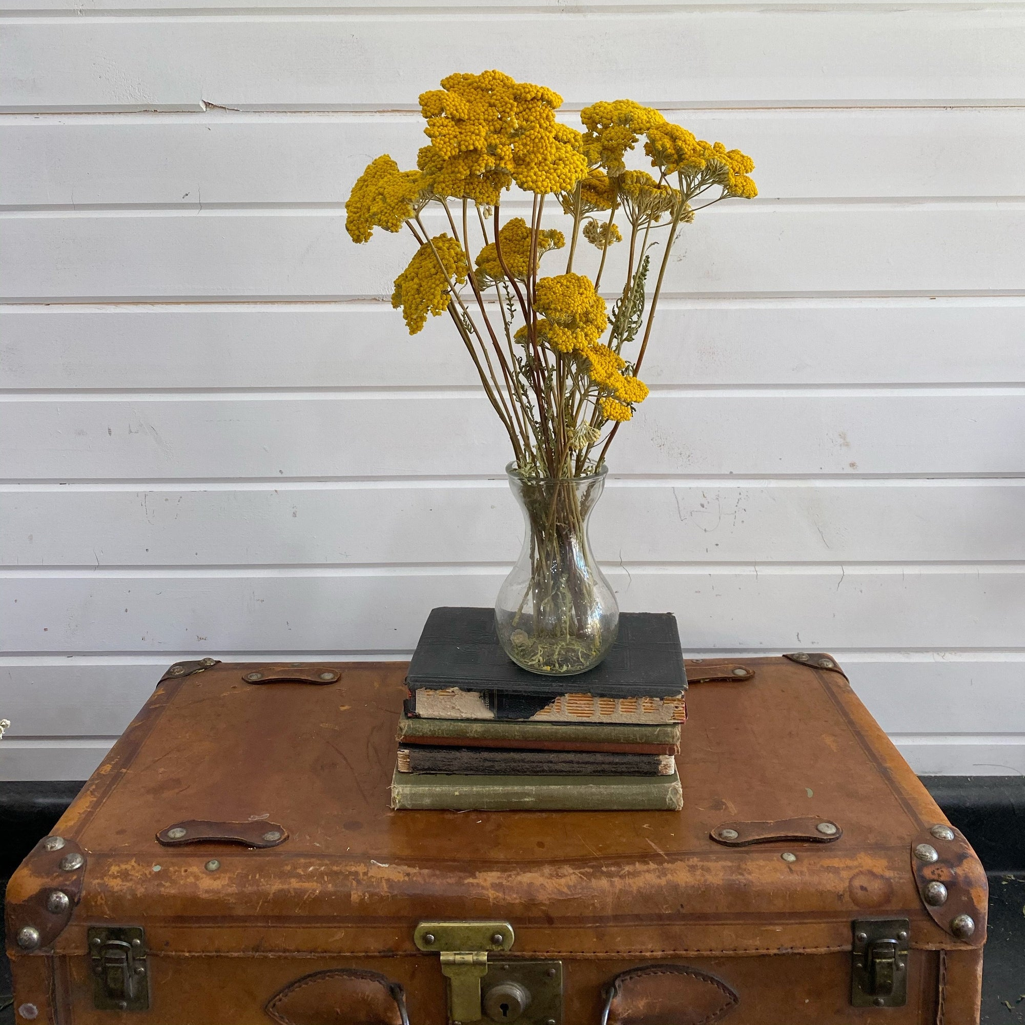 Achillea Yarrow - Dried/Natural- Yellow _sola_wood_flowers