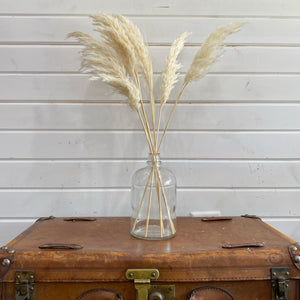 Pampas Grass- White _sola_wood_flowers