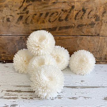 Chrysanthemums (mums) - Set of 6 _sola_wood_flowers