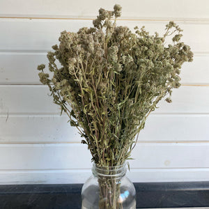 Mountain Mint -Preserved Dried Filler