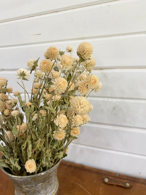 Globe Amaranth - Light Peach - Dried -4oz _sola_wood_flowers