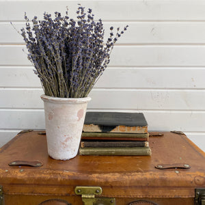 Lavender- Dried/Natural - Old English _sola_wood_flowers